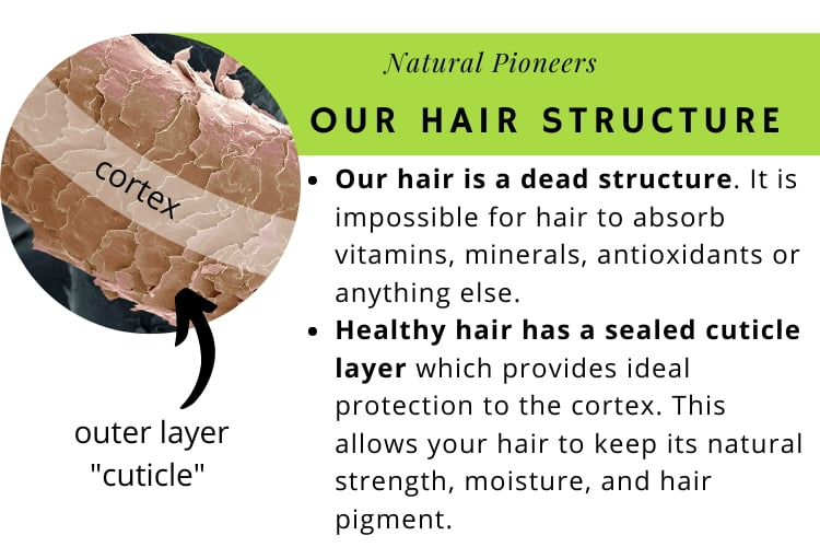 Natural Pioneers Is natural shampoo really better our hair structure healthy hair